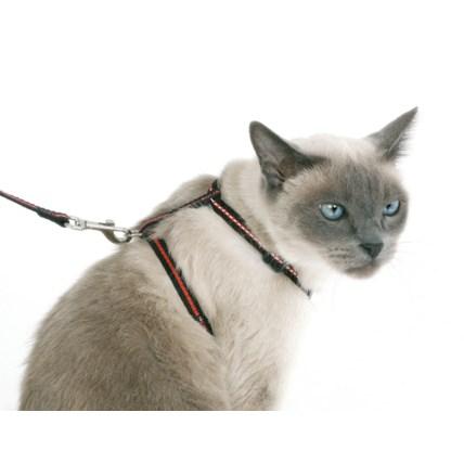 Set med Kattsele, koppel & halsband